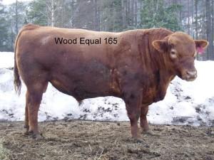 WoodEqual_165
